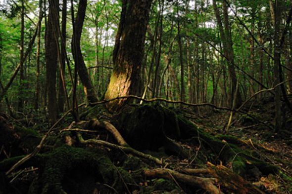 Bosques-encantados (3)