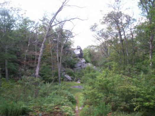 Bosques-encantados (4)