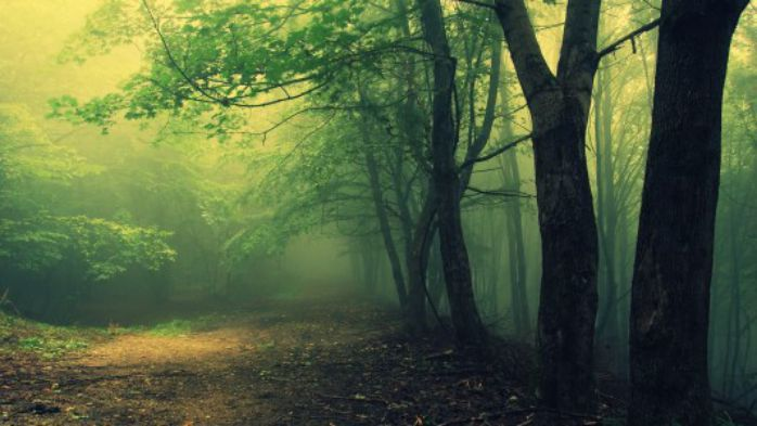 Bosques-encantados (1)