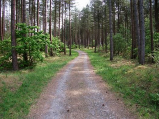 Bosques-encantados (5)